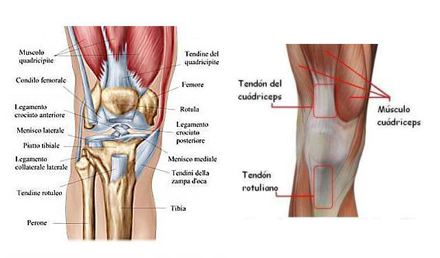 Dolor de rodilla fundaci n internacional del dolor - Dolor en la parte interior de la rodilla ...